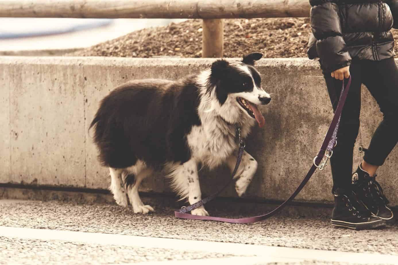 Use Your Dog to Get a Good Cardio Workout