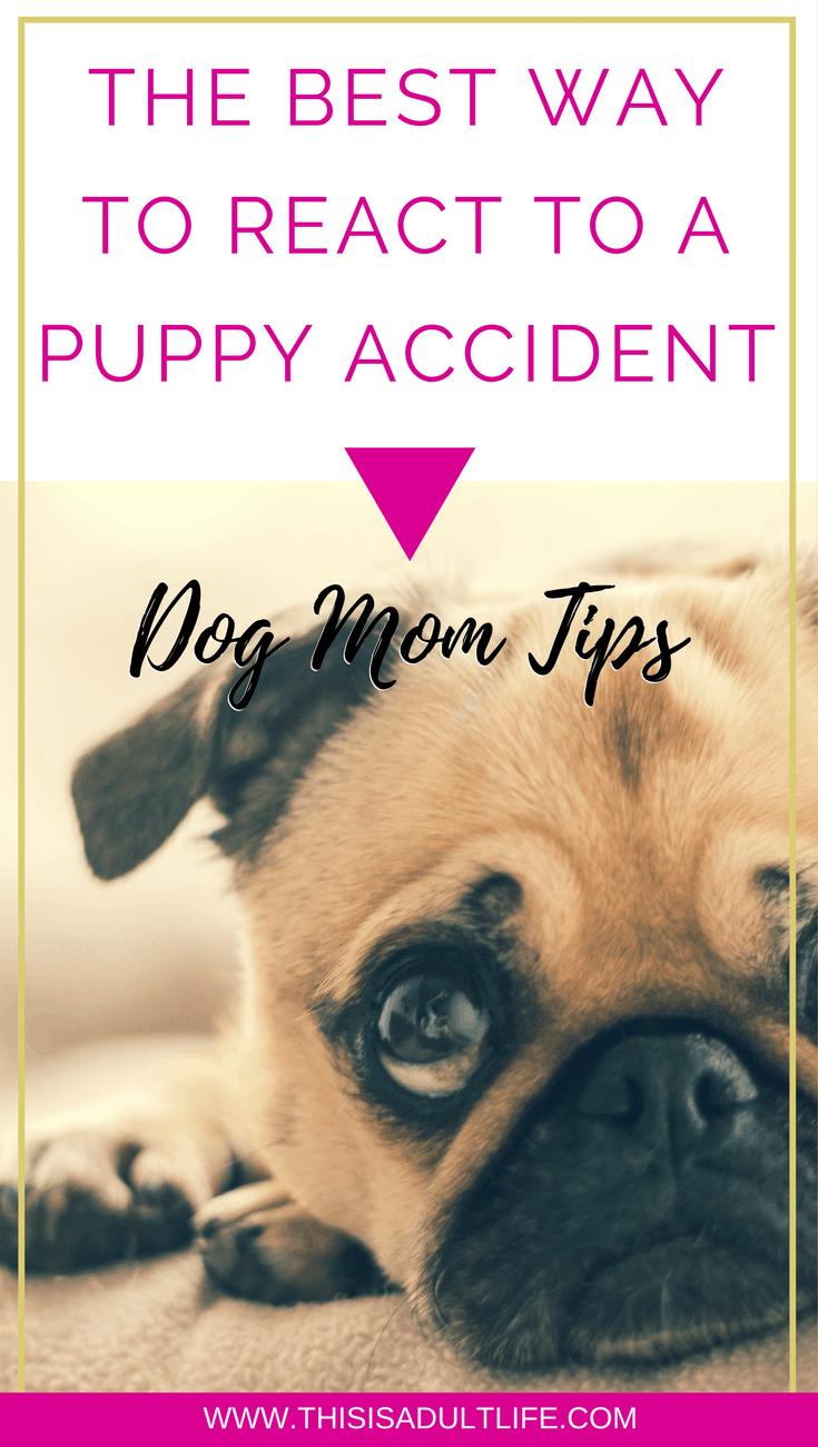 puppy accident