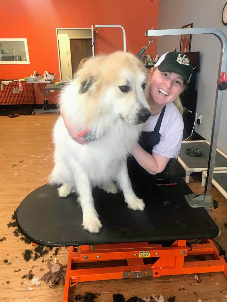 An Interview on Life and Successful Dog Grooming